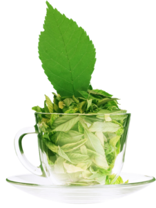 stevia-tea-glass-cup-72dpi